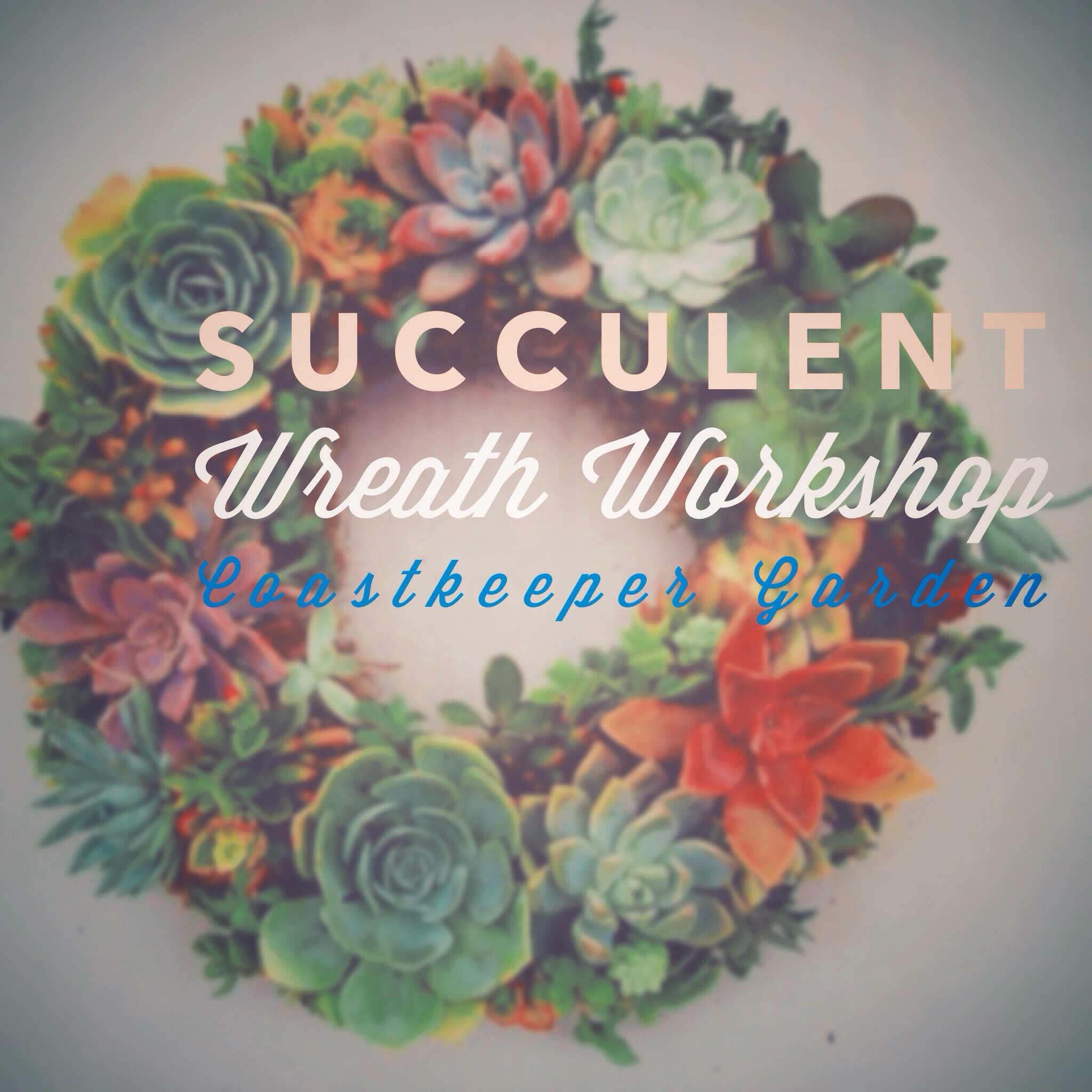 Check out this succulent wreath!