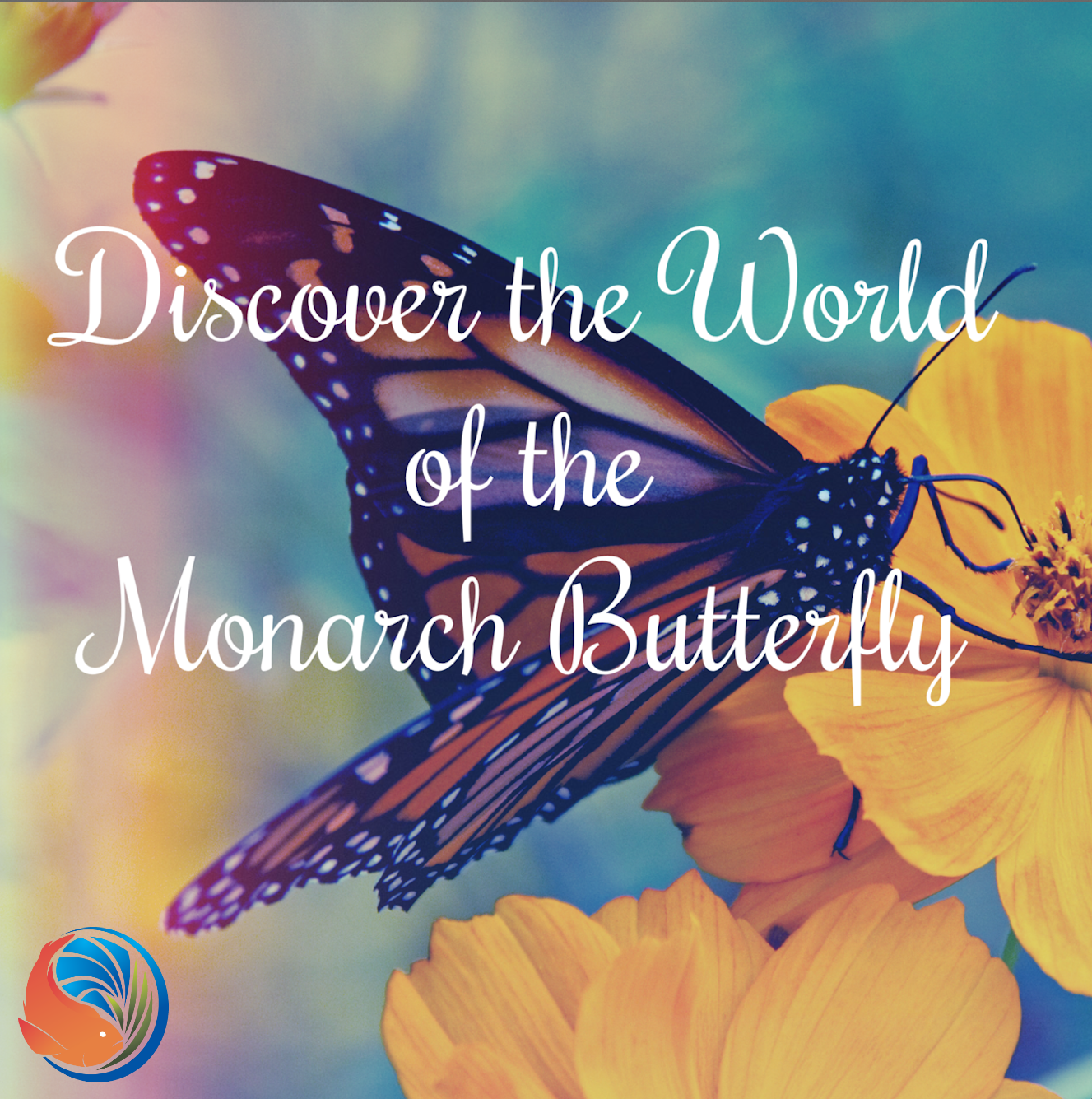 See the beautiful monarch butterfly