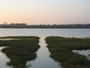 wetlands_Bolsa_Chica_Wetland_Reserves-300x225.jpg