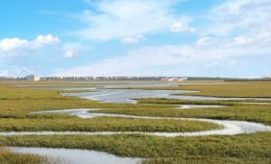 Wetlands_Marsh-with-sky-copy-horizontal-300x182.jpg