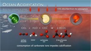 ocean_acidification_NOAA-ocean-acidification-300x168.jpg