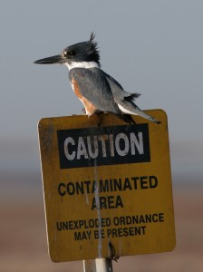 kingfisher-on-danger-sign21-224x300lawandpolicyclinic.jpg
