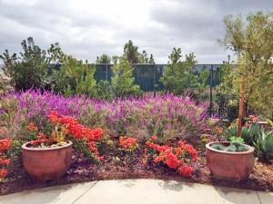 Coastkeeper_garden_Garden-photo-11.16.13-300x225.jpg
