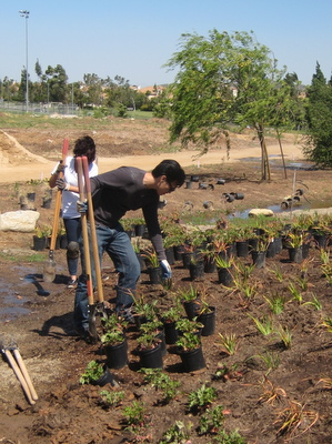 UCI Interns planting in the dry creek