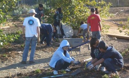 La Quinta High School's Recycling Club planting ferns in the Oak Woodland