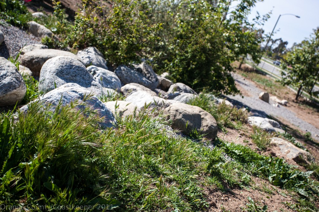 A lush view down a boulder path into the Nature Play Garden
