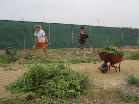 Weeds, Weeds, Weeds!