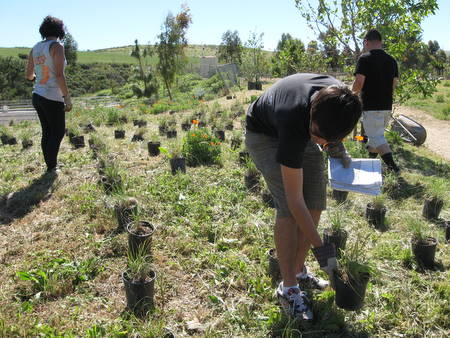 Interns planted over 600 grasses!