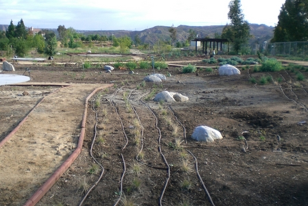 Drip irrigation before…
