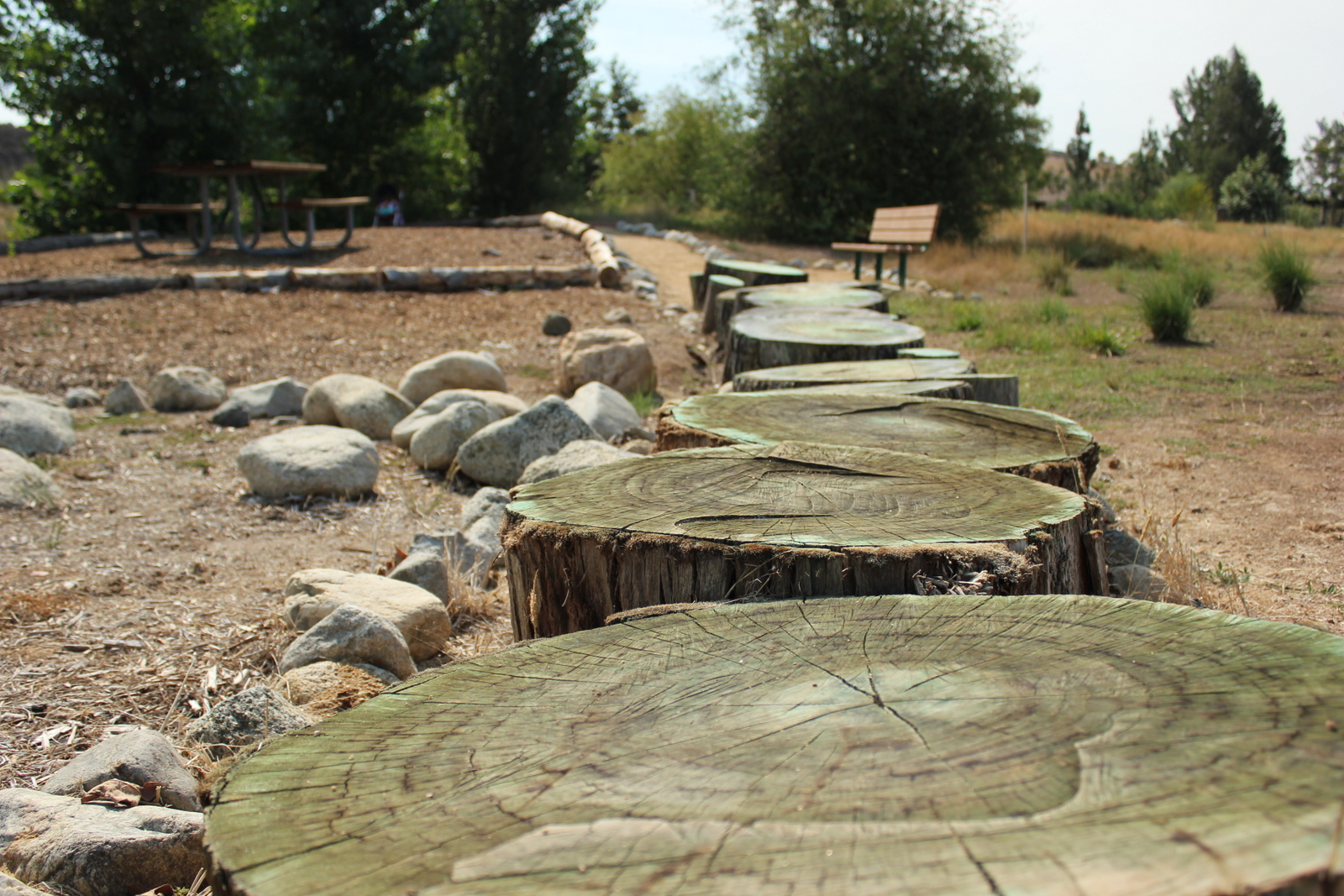 Log pathway feature in the Natural Play Garden.
