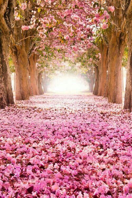pink_tree_LPE.jpg