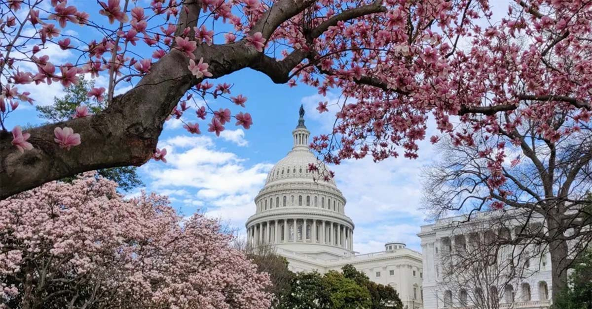 Our Goals - Photo of Capitol Hill building in the spring framed by branches with cherry blossoms. Coffee Party USA.