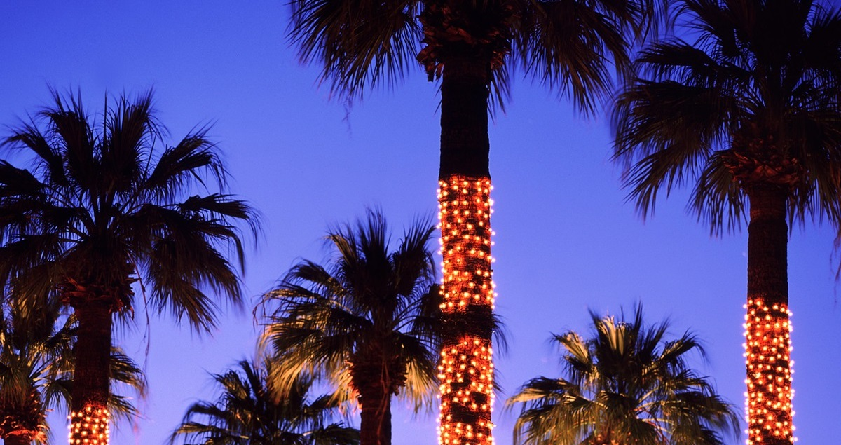 holiday_lights_palm_trees-2.jpg