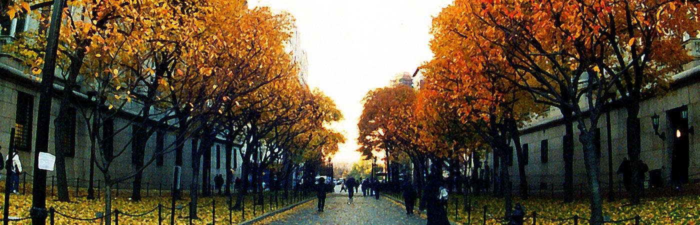 Fall at Morningside Campus