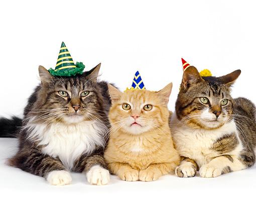 cat_party.jpg