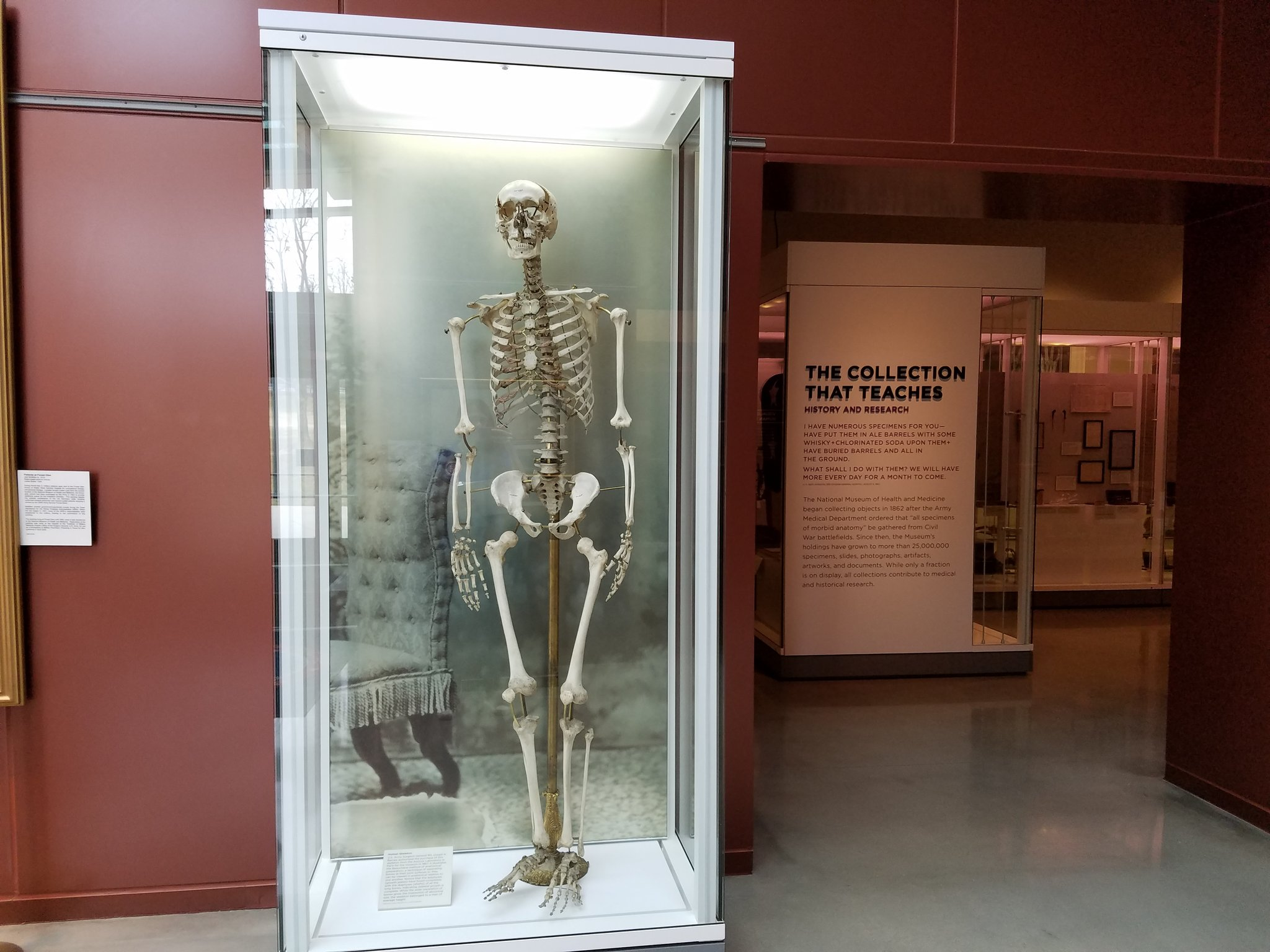 medical_museum_skeleton.jpeg