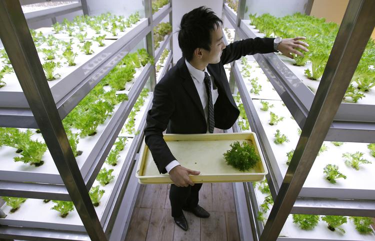 18-urban-farm-1.jpg