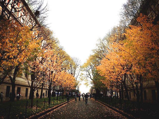 Grad_grams_trees.jpg