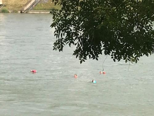 rheinschwimmern_2.jpg