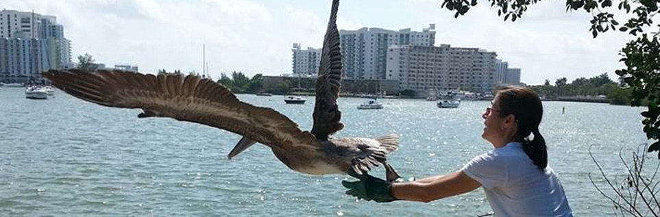 pelican012.jpg