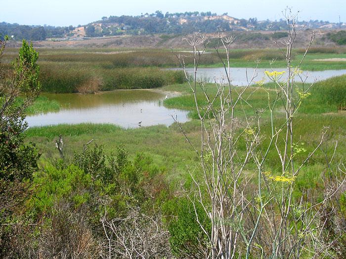 san-elijo-lagoon.jpg