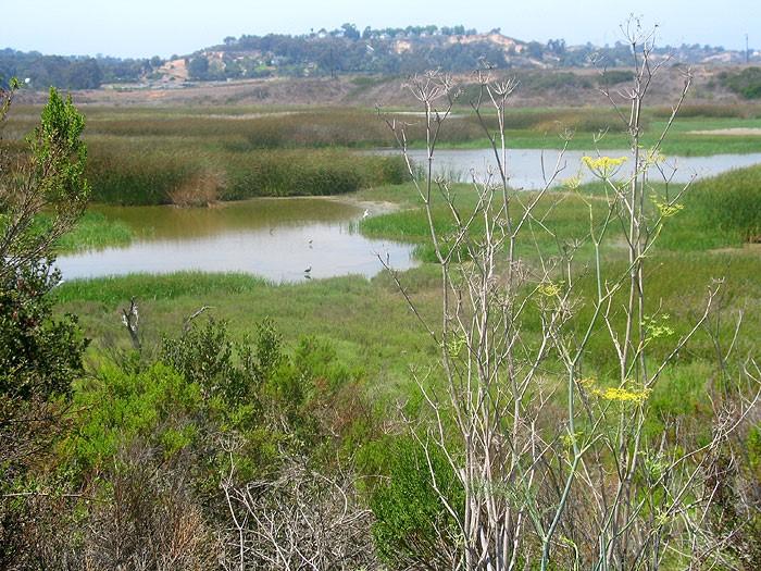 San_Elijo_Lagoon.jpg