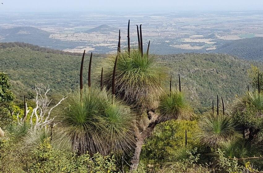 grasstrees-waka-waka.jpg