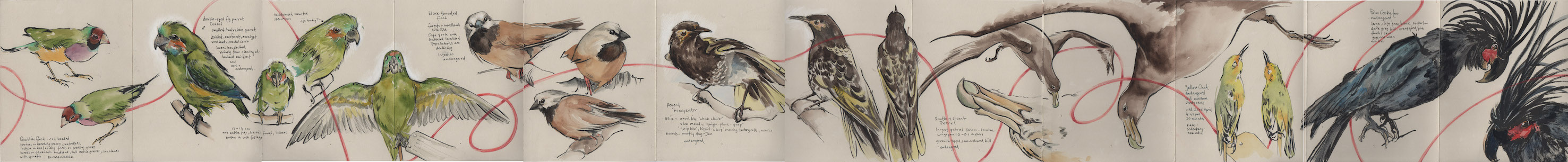 Redemption_Series_Birds_whole_sketchbook.jpg