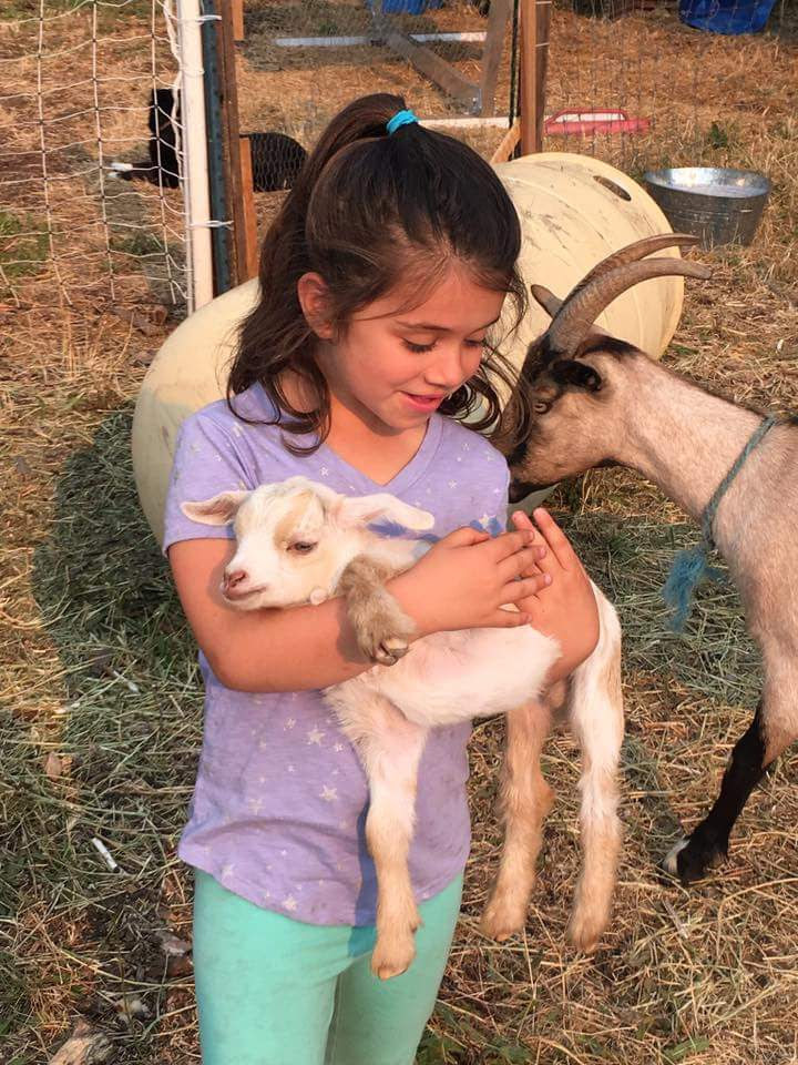 Girl with goats at Wild and Radish EcoVillage site