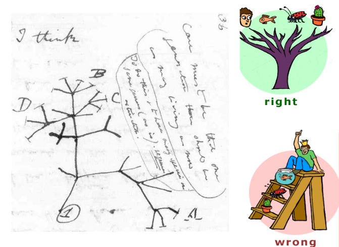 Darwin's drawing of tree relationship between species