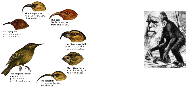 seven related species of birds, with different beaks, etc.
