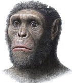 drawing of primate reconstruction