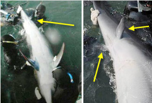 photos of a whale and a dolphin with limbs