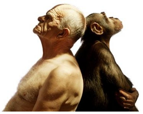 photo of human back-to-back with chimpanzee