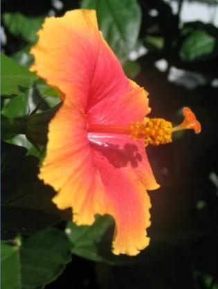 closeup photograph of beautiful flower