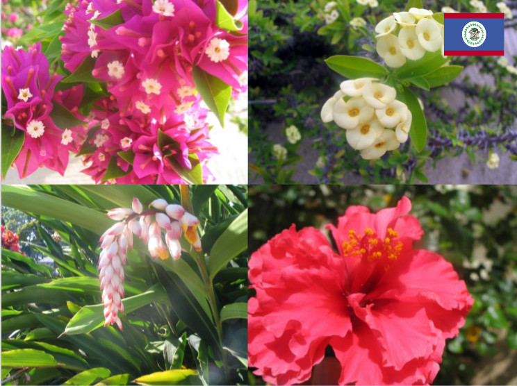 photos of four flowers