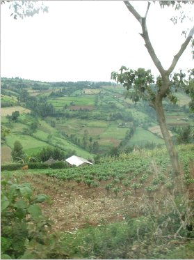 the fertile highlands of the Bomet District, Kenya