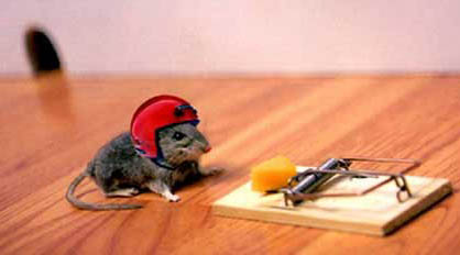 photo of mouse wearing helmet as protection from mouse trap with cheese