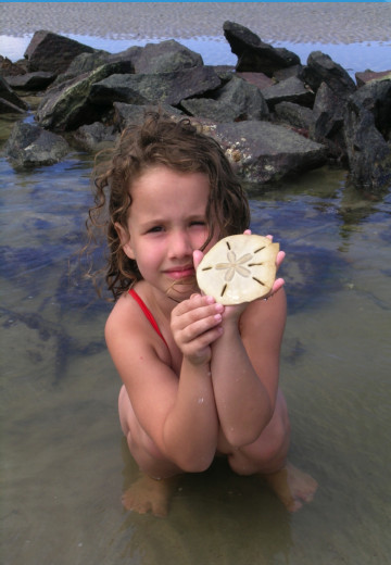 photo of child holding sea shell