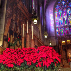 poinsettias decorating the Chapel during Advent