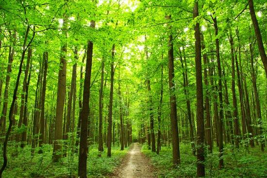 photo of path through green forest