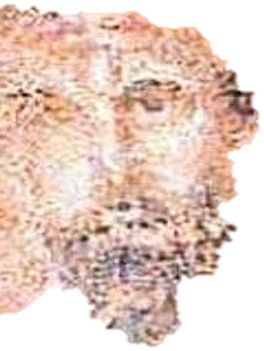 fuzzy image of a face