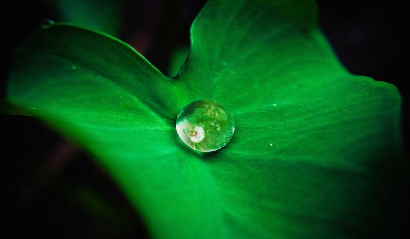 leaf.2.jpg