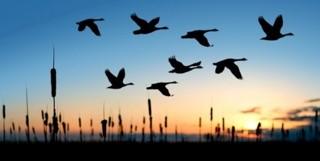 BirdsSunset.jpg