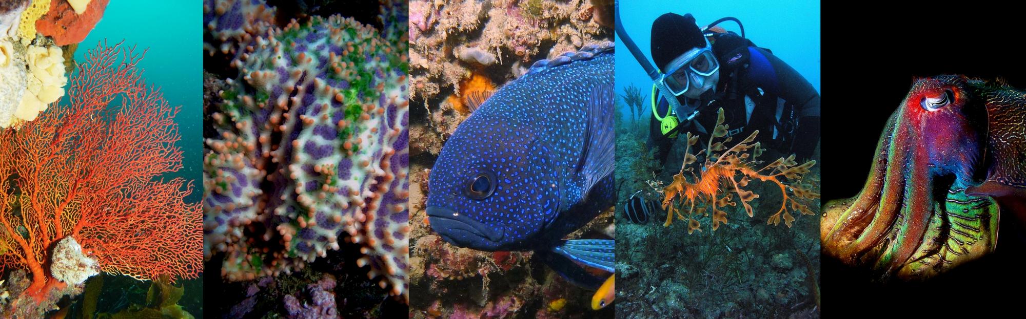 Reef_Watch_turns_20!(1).jpg