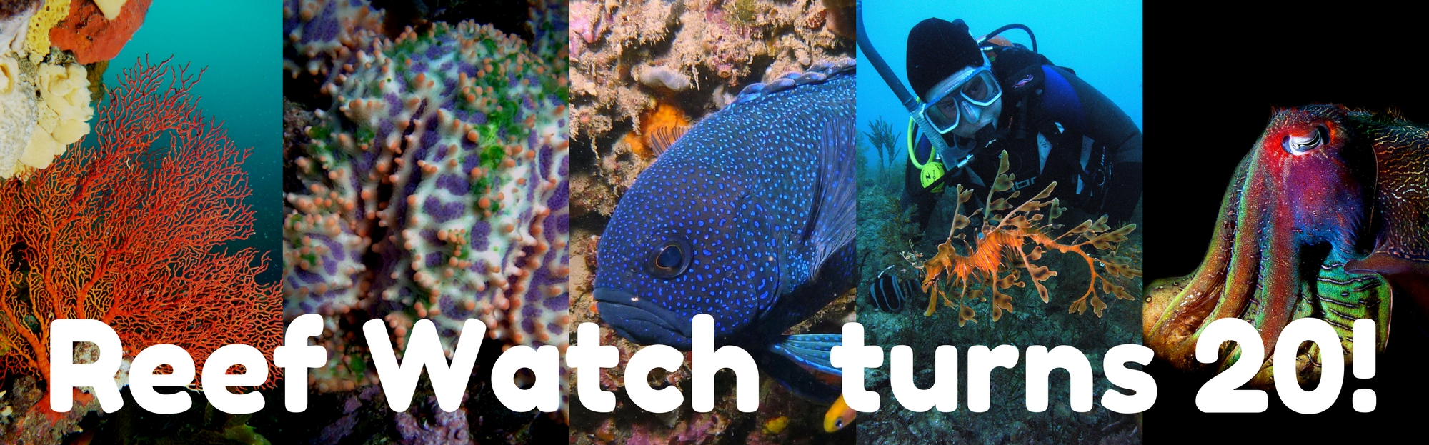 Reef Watch Turns 20!