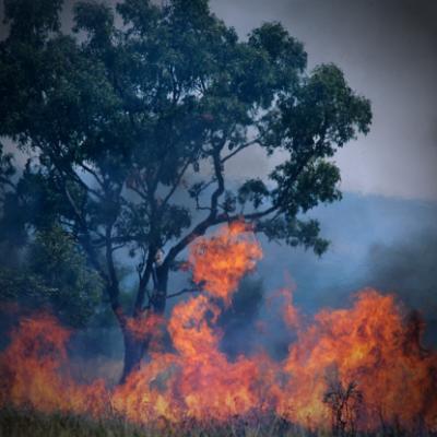 CE Blog: Hope through the smoke