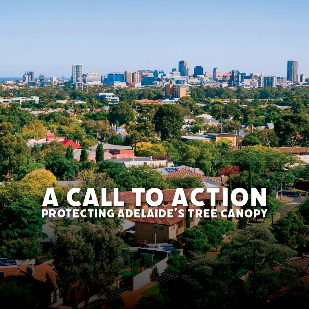 A call to action to protect Adelaide's big trees