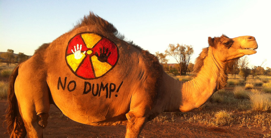 no-dumps-camel