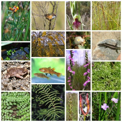 species collage